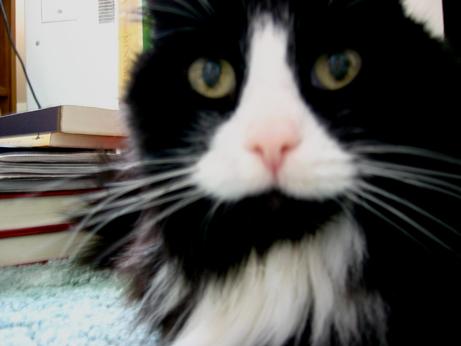 Cat1031a,jpg