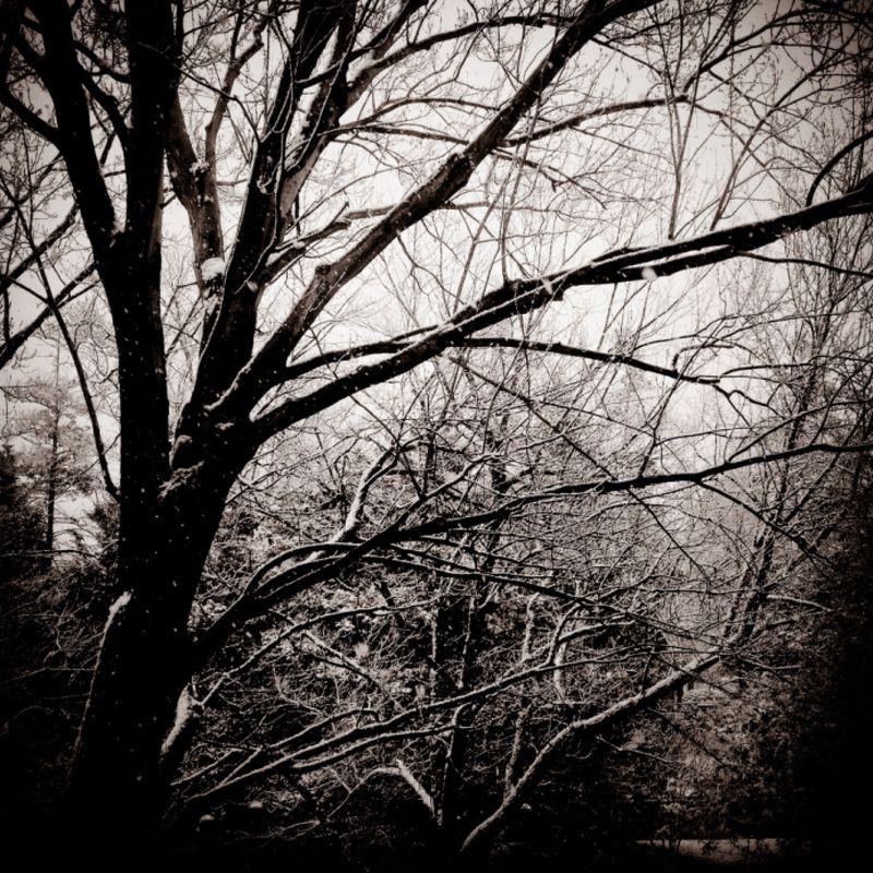 Dc-snow2